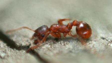Ameisen fallen